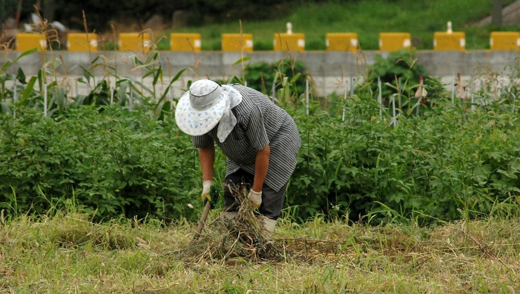 Food production in Latin America